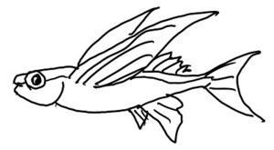 飛び魚.jpeg